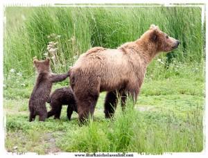 bears1